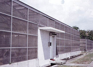 "Figure 1 Screenhouse for Citrus Foundation Stock, Vietnam. It Has Double Doors in an ""Air-Lock"" System, to Keep Out Insects"
