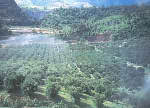 Figure 1 Citrus Orchard in Japan with Overhead Sprinkler System for Irrigation and Pesticide Sprays