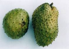 Figure 2 Soursop