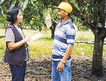 Figure 1 Extension Specialist (Left) Talking with Mango Grower in the Philippines