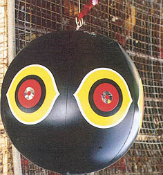 "Figure 1 Balloon with ""Ghostly Eyes"" Keeps Wild Birds Away from Chicken Houses in Taiwan"