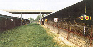 Figure 2 Chicken House Protected by Balloons