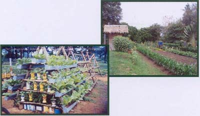 Figure 3 Backyard <B>(Left)</B> and Allotment <B>(Above)</B> Gardens in the Philippines.