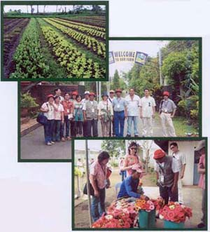 Figure 4 Workshop Participants Visit Upa Production Areas around Tagaytay City, Philippines.<BR>