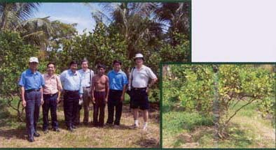 Figure 1 The Survey Team Visited a Pursat Orange Orchard Seriously Affected by the Greening Disease in Battambang Province, Cambodia. <B>(Inset)</B> a 5-Year-Old Orange Tree Showing Greening Symptoms.